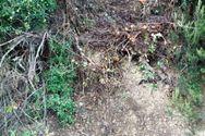 Αιτωλοακαρνανία - Πέθανε μπροστά στην μητέρα του την ώρα που έκοβε ξύλα! (φωτο)