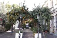 Γεροκωστοπούλου - Ο πεζόδρομος... με τις νεραντζιές και τα σκαλοπάτια του (pics)