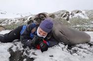 H απρόσμενη επαφή μιας φωτογράφου άγριας ζωής, με μια... φώκια (video)