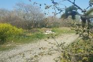 Πάτρα: Το σχέδιο για τις παρεμβάσεις και το πάρκο στο Πλατανόδασος