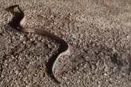 Αιτωλοακαρνανία: Φίδι κόβει βόλτες μέσα στο χειμώνα (video)