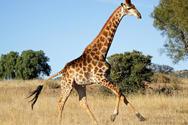 Περίπου 1.700 είδη ζώων κινδυνεύουν με εξαφάνιση