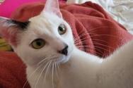 Πάτρα - Χάθηκε γατάκι στην περιοχή της Αγυιάς (φωτο)