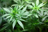 Ηλεία: Βρέθηκαν στην τσιμπίδα του νόμου για ναρκωτικές ουσίες