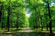 Ιταλία: Πετρελαϊκή θα φυτέψει δάσος έκτασης ίσης με τα 2/3 της Ελλάδας