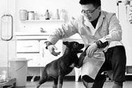 Επιστήμονες κλωνοποίησαν τον πρώτο αστυνομικό σκύλο στην ιστορία