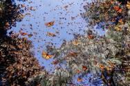 Εκατομμύρια πεταλούδες