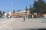 Άλογο έκανε… βόλτες στη Θεσσαλονίκη (video)