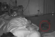 Φίδι δάγκωσε γυναίκα την ώρα που κοιμόταν (video)