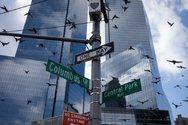 ΗΠΑ: Οι ουρανοξύστες σκοτώνουν ένα δισεκατομμύριο πουλιά κάθε χρόνο