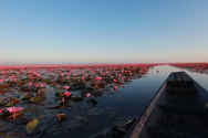Η εντυπωσιακή λίμνη των λωτών στην Ταϊλάνδη