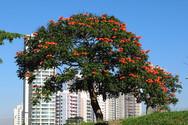 Ένα μοναδικό στο είδος του δέντρο