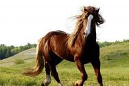 Το σημερινό άλογο δεν μοιάζει με εκείνο της αρχαιότητας