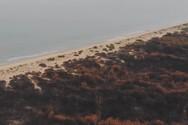 Εναέρια και επίγεια πλάνα από τη Στροφυλιά - H σημερινή κατάσταση του δάσους (video)