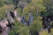 Ανακαλύφθηκε δέντρο 2.624 ετών