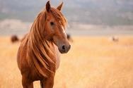Έκανε βόλτες στην Αττική οδό ένα άλογο!