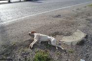 Αγρίνιο - Άγνωστος τραυμάτισε θανάσιμα σκύλο, με βέργα ψαροντούφεκου