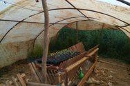 Δυτική Ελλάδα: Συνελήφθησαν καλλιεργητές ναρκωτικών στην Κονοπίνα Αιτωλοακαρνανίας
