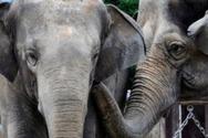 Τα πιο μεγάλα ζώα θα έχουν εξαφανιστεί σε 100 χρόνια
