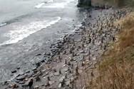 Stonehenge - Μια παραλία γεμάτη με πύργους από πέτρες (video)