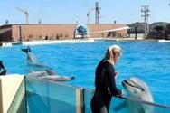 Διαμαρτυρία για τη λειτουργία του δελφινάριου στο Αττικό Πάρκο