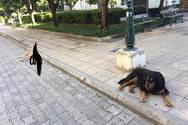 Συγκίνηση στην Πάτρα για τον ξανθούλη αδέσποτο σκυλάκο που
