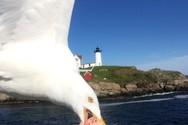 Γλάρος τρώει το σάντουιτς γυναίκας σε πλοίο και γίνεται viral!