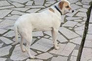 Πάτρα: Χάθηκε σκυλάκι στην οδό Γούναρη