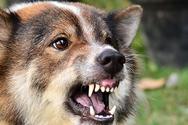Αχαΐα: Γυναίκα τραυματίστηκε από σκύλο