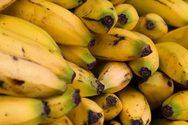 Κινδυνεύουν με αφανισμό οι μπανάνες Κολομβίας