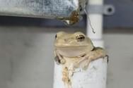Βάτραχος έχει βρει ένα τέλειο σημείο δροσιάς (video)