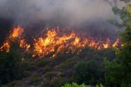 Δυτική Αχαΐα - Το έλος, έσωσε το πευκοδάσος της Στροφυλιάς από τις φλόγες