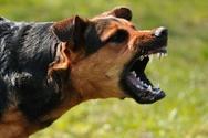 Αιτωλοακαρνανία: Σκύλος δάγκωσε 35χρονη στο πόδι