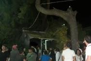 Πάτρα: Μεγάλο κλαδί από δέντρο έπεσε στα Ψηλαλώνια, δίπλα σε κόσμο