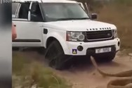 Φίδι... καταδιώκει τουρίστες στην Αφρική (video)