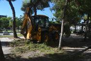 Ξεκίνησε το εποχικό κλάδεμα των δέντρων στους δρόμους της Πάτρας (φωτο)