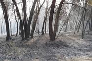 Ηλεία: Ένας ηλικιωμένος άνδρας βρέθηκε νεκρός στο Κουνουπέλι
