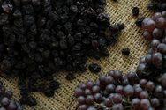 Αίγιο: Αφαίρεσαν από αποθήκη 1.100 κιλά κορινθιακής σταφίδας