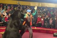 Ρωσία: Αρκούδα επιτέθηκε στον θηριοδαμαστή μπροστά σε μικρά παιδιά (video)
