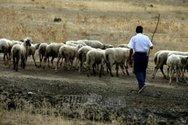 Έρχονται αποζημιώσεις 4 εκατ. ευρώ σε κτηνοτρόφους