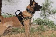 Αγρίνιο: Εντοπίστηκαν ναρκωτικά και όπλα με τη βοήθεια του σκύλου Hippy