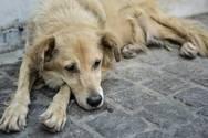 Μεσολόγγι - Άγνωστος θανάτωσε αδέσποτο σκύλο