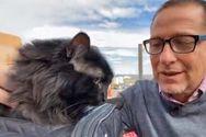 Γάτος που αγνοούνταν για 5 χρόνια βρέθηκε 1.900 χλμ. από το σπίτι του (video)