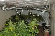 Εντοπίστηκε οργανωμένο εργαστήριο υδροπονικής καλλιέργειας κάνναβης στον Πύργο (φωτο)