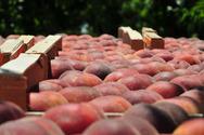 Απατεώνες άρπαξαν 18 τόνους φρούτα στη Λάρισα