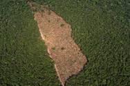Η αποψίλωση στον Αμαζόνιο εκτοξεύτηκε τον Νοέμβριο