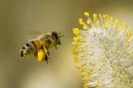 7 εκπληκτικές χρήσεις που δεν γνωρίζετε για το κερί μέλισσας