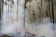 Οι πυρκαγιές στην Αυστραλία μπορεί να γίνουν σύνηθες φαινόμενο