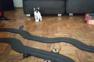 Τηλεκατευθυνόμενο σε πίστα κάνει μια γάτα να... βραχυκυκλώσει (video)