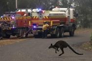Τα απειλούμενα είδη επλήγησαν περισσότερο από τις πυρκαγιές στην Αυστραλία